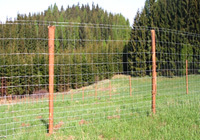 Forest and highway fence